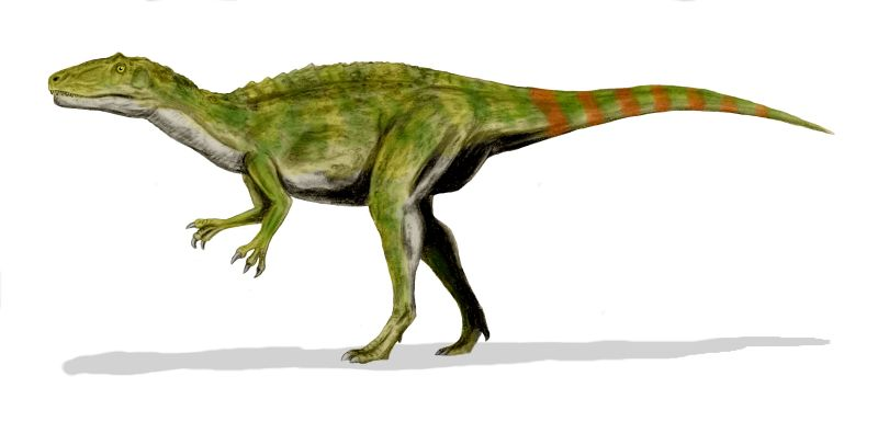 説  Fukuiraptor kitadaniensis, an allosaurid from the Early Cretaceous of Japan, pencil drawing, digital coloring